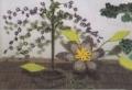 Поделки своими руками: цветы, сплетенные из бисера.Описание + схемы