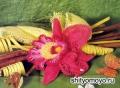 Розовая орхидея, связанная крючком. Описание и схемы вязания бесплатно
