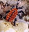 Поделки своими руками: животные из бисера – жук-листоед. Схема. Для начинающих