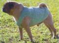 Одежда для животных: светло-зеленый жилет для собаки. Описание + схемы + выкройка