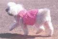 Одежда для животных: розовое платье для собаки. Описание + схемы