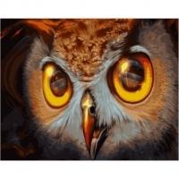 Альбом картины по номерам (склад Ростов-на-Дону) 40х50 см в ассортименте (GX 30086 Хищный взгляд совы)