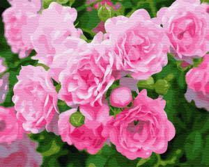 Картина по номерам GX28850 Кустовая роза