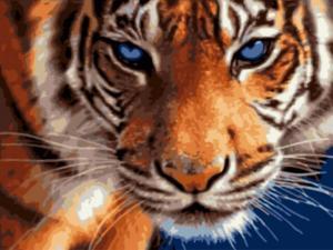 Картина по номерам EX5808 Взгляд тигра