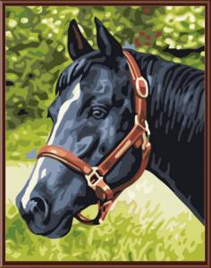 Картина по номерам EX5079 Черный конь