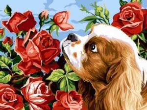 Картина по номерам EX5257 Щенок и розы