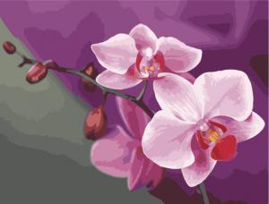 Картина по номерам MG1081 Розовые орхидеи