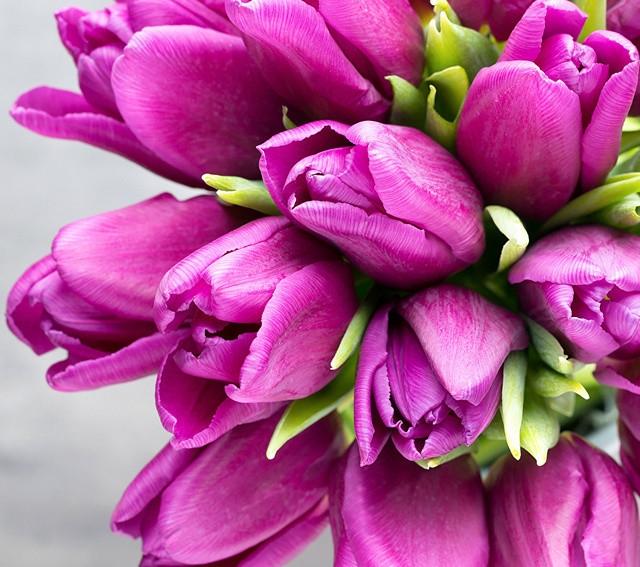 Картина по номерам GX 28963 Розовое настроение 40*50 см
